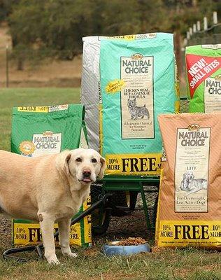 Nutro Dog Food Recall Vomiting